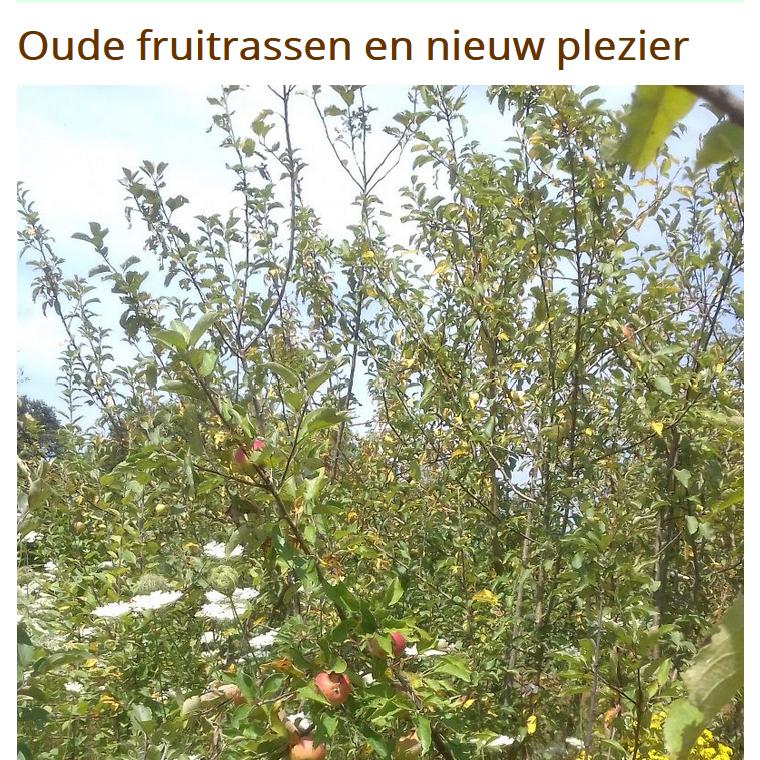 Zin in Schaduw én Fruit uit eigen tuin én oude fruitrassen in leven houden?